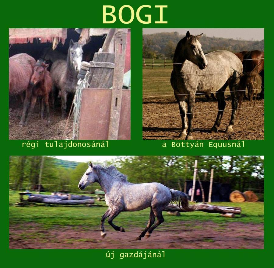 bogi_before_after