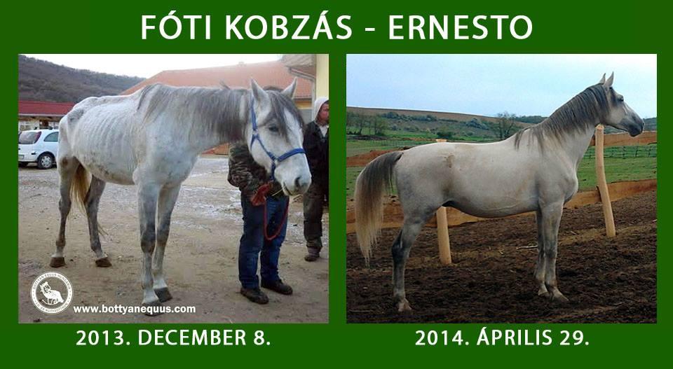 foti_kobzas