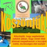 koszonet_a_szavazasert