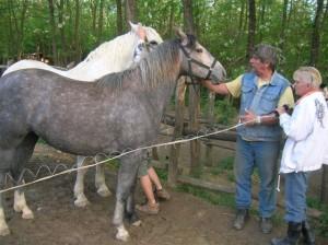 bottyan_equus_hungaria120508_001_10