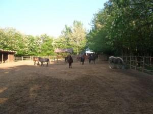 bottyan_equus_hungaria120508_001_3
