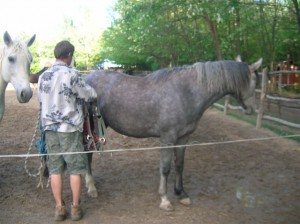 bottyan_equus_hungaria120508_001_9