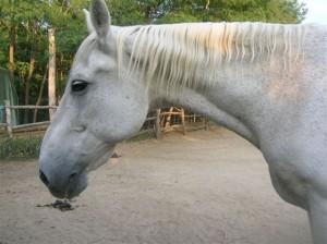 bottyan_equusnal120912_015