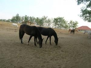 bottyan_equusnal120912_022