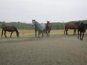 bottyan_equusnal120912_023