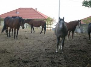 bottyan_equusnal120912_024