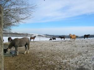 bottyan_equus_hungaria121209_006