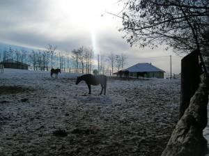 bottyan_equus_hungaria121209_008