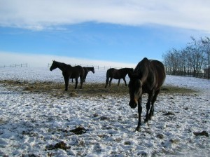 bottyan_equus_hungaria121209_017