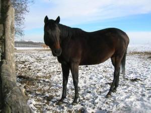 bottyan_equus_hungaria121209_020