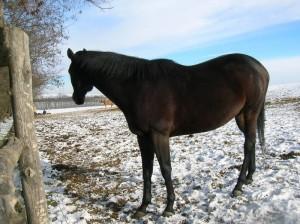 bottyan_equus_hungaria121209_021