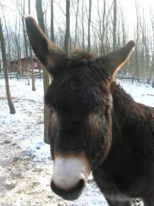 bottyan_equus_hungaria121209_029