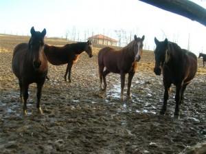 bottyan_equus_120123_015