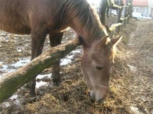 bottyan_equus_120123_024