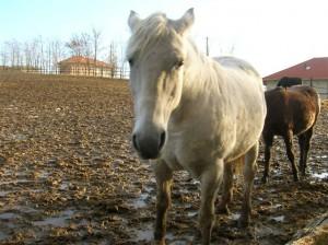 bottyan_equus_120123_031