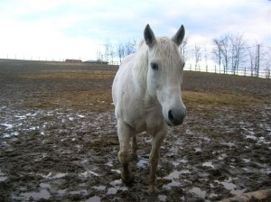 bottyan_equus_120123_048