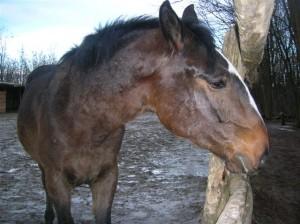 bottyan_equus_120123_049