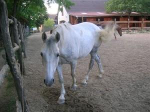 bottyan_equus_hungaria12.05.27_001