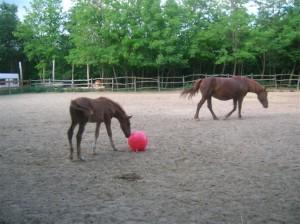 bottyan_equus_hungaria12.05.27_003
