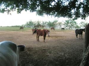 bottyan_equus_hungaria12.05.27_015