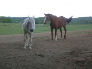 bottyan_equus_hungaria12.05.27_017