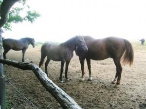 bottyan_equus_hungaria12.05.27_027