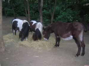 bottyan_equus_hungaria12.05.27_033