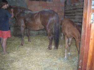 bottyan_equus_hungaria12.05.27_037