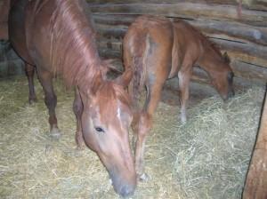 bottyan_equus_hungaria12.05.27_039