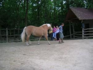 bottyan_equus_hungaria12.05.27_040