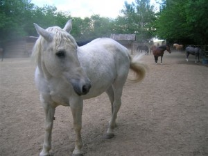 bottyan_equus_hungaria12.05.27_042
