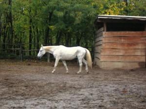 bottyan_equus121027_002