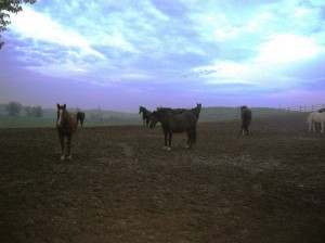 bottyan_equus121027_008