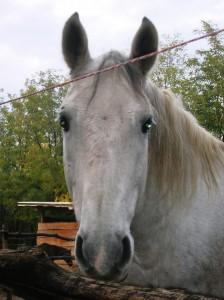 bottyan_equus121027_012