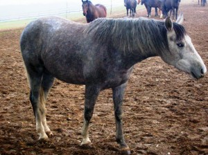 bottyan_equus121027_019