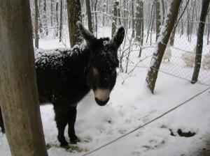 bottyan_equus_hungaria130210_004