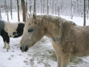 bottyan_equus_hungaria130210_005