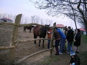 bottyan_equus_hungaria130310_037