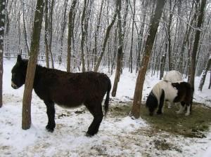 bottyan-equus-hungaria-130119-004
