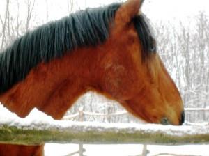 bottyan-equus-hungaria-130119-013