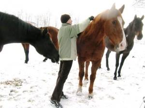 bottyan-equus-hungaria-130119-021