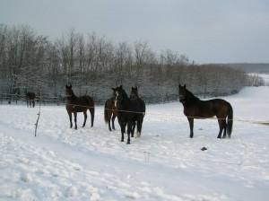 bottyan-equus-hungaria-130119-040