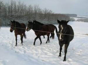 bottyan-equus-hungaria-130119-042