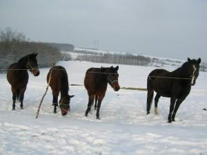 bottyan-equus-hungaria-130119-043