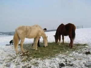 bottyan-equus-hungaria-130119-047
