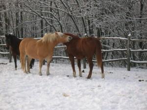 bottyan-equus-hungaria-130119-048