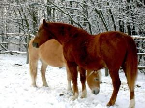 bottyan-equus-hungaria-130119-051