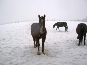 bottyan-equus-hungaria-130210-013