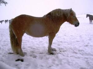 bottyan-equus-hungaria-130210-014