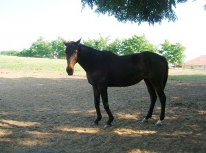 bottyan_equus13.06.30_007